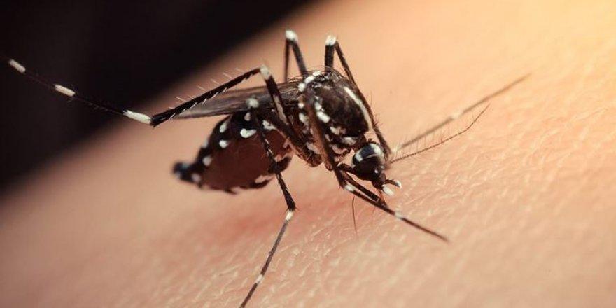 Zika virüsü Tüm Düyaya Yayılmaya Başladı! Zika virüsünün Tedavisi Olmadığı Ortaya Çıktı
