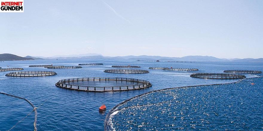 Muğla'da 2 Milyon Çiftlik Balığı Firar Etti!
